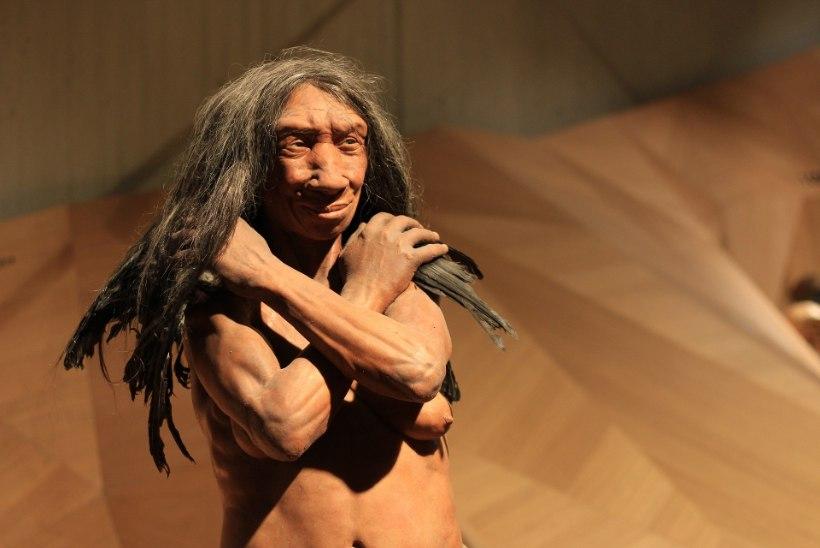 Neandertallased maiustasid rannakarpide, kala ja hüljestega