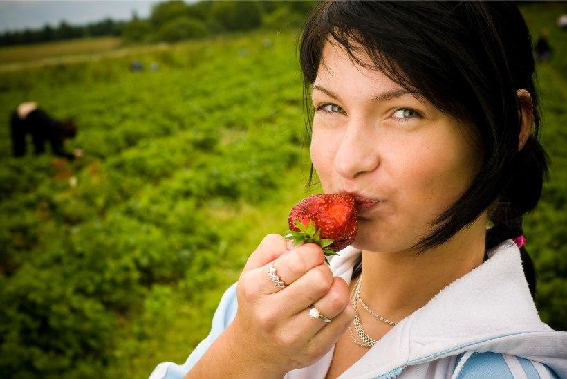 MAGUSAD KASUMID: maasikakasvatajatel käsi kullas