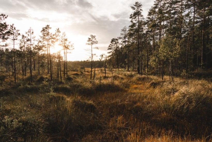 10 minutit enda heaks: tuuluta mõtteid metsas või mere ääres!