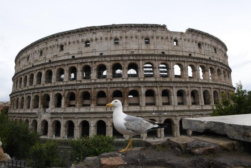 LENDAVAD KISKJAD! Rooma kajakad maiustavad rottide ja tuvide kallal