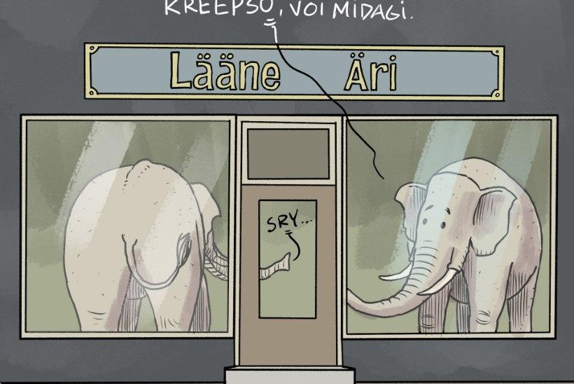 Uskumatu, aga tõsi! Haapsalus võis näha äri vaateaknal elevante