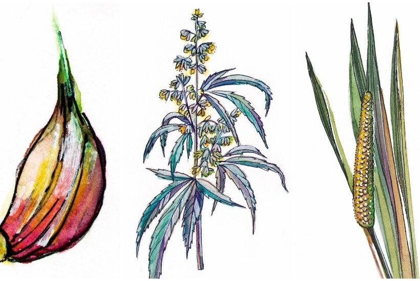 Ravi loodusest: kukesaba ja kalmus aitavad puugihaigusest taastuda