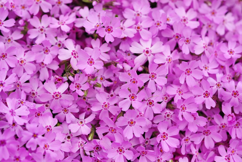 Silmailu koduaias: kirevat värvi õied kiviktaimlas