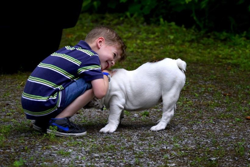 Arst vastab: mida teha, kui allergik igatseb koera?