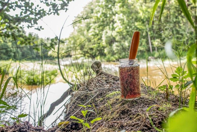 VIDEO   Nuga roostest puhtaks koolaga! Kuidas on see võimalik?