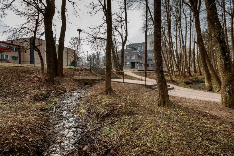 Jalutuskäik Tallinna kadunud vetemaailma jälgedes: Mustjõgi, Härjapea, Veerenn ja teised