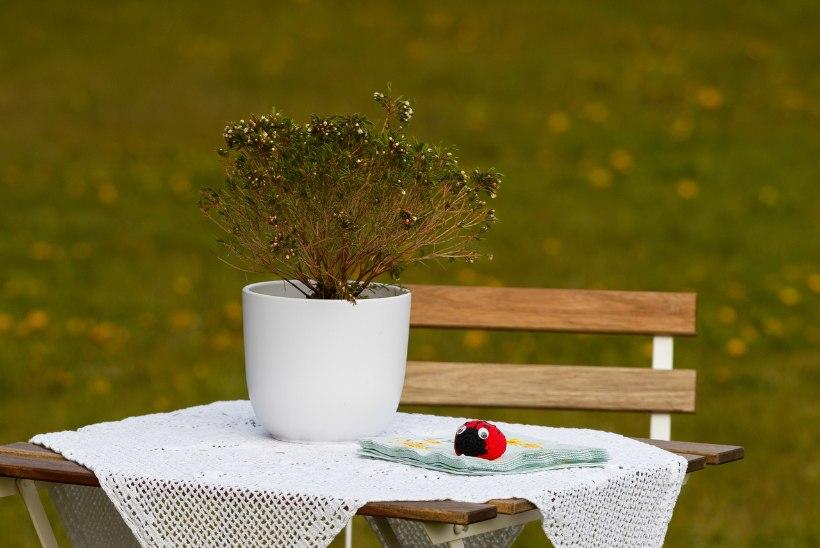Et tuuleiilid ei kimbutaks: laudlina lõbusad raskused