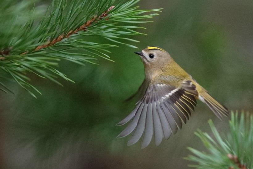 FOTO | Pilk lindude maailma
