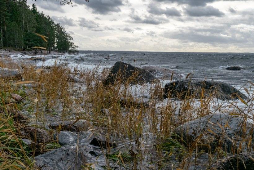 """Tarmo Soomere: """"Kui meil enam külma talve ei ole, võib terve maailm seisma jääda."""""""