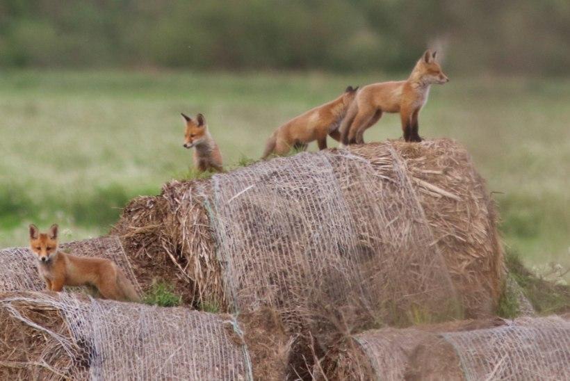 Kuidas käituda suvises metsas: hoia loomalastest eemale