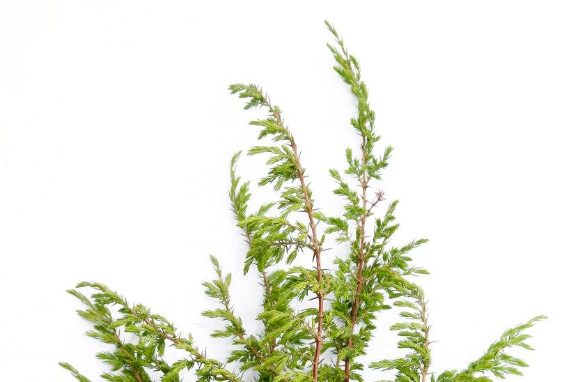 Vihtle ja tee lillevett ehk Võta väekad taimed sauna kaasa
