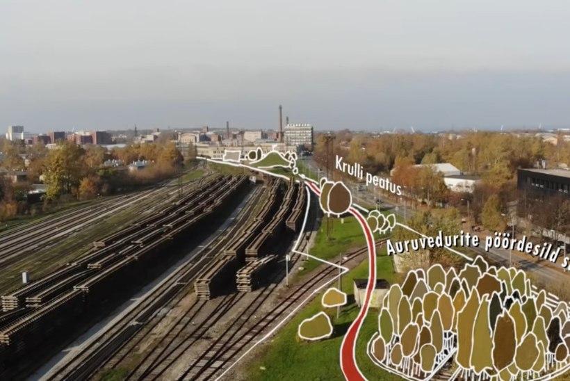KOPLI PARGIPROJEKT: sellega kasvaks putukate elamistingimused, ümbritseva kinnisvara väärtus ja Tallinna võimalus olulisele Euroopa tiitlile