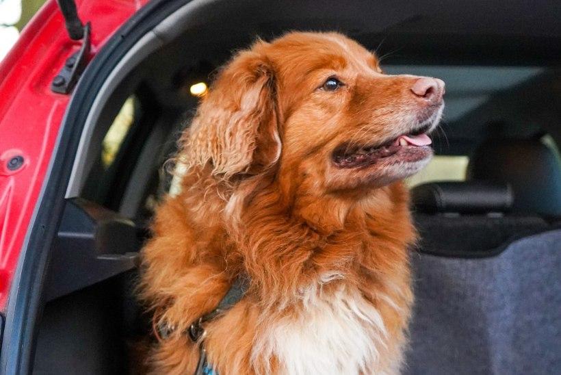 SUVEKUUMUS JÄTKUB: 10 asja, mida mitte mingil juhul autosse ei tohi jätta