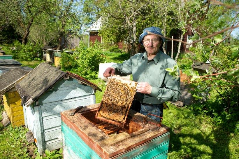 TIIVULISED TUNNISTAJAD: Tapa kandis paljastasid mesilased varga