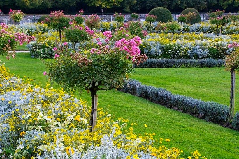 Taimed, mis toovad aeda troopilise meeleolu, kuid ei vaja palju hoolt