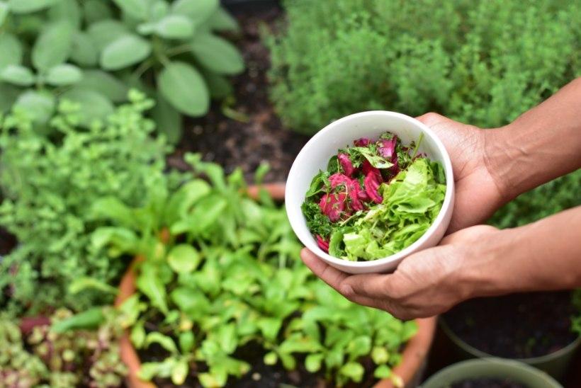 NIPIRAAMATU TEST | Vaata järele, milline aednik sa oled!