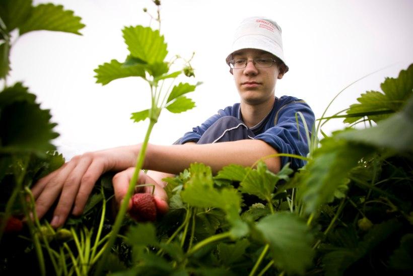 Iga aastaga käib rohkem noori tööl, kuid paljud neist saavad ikkagi palka mustalt