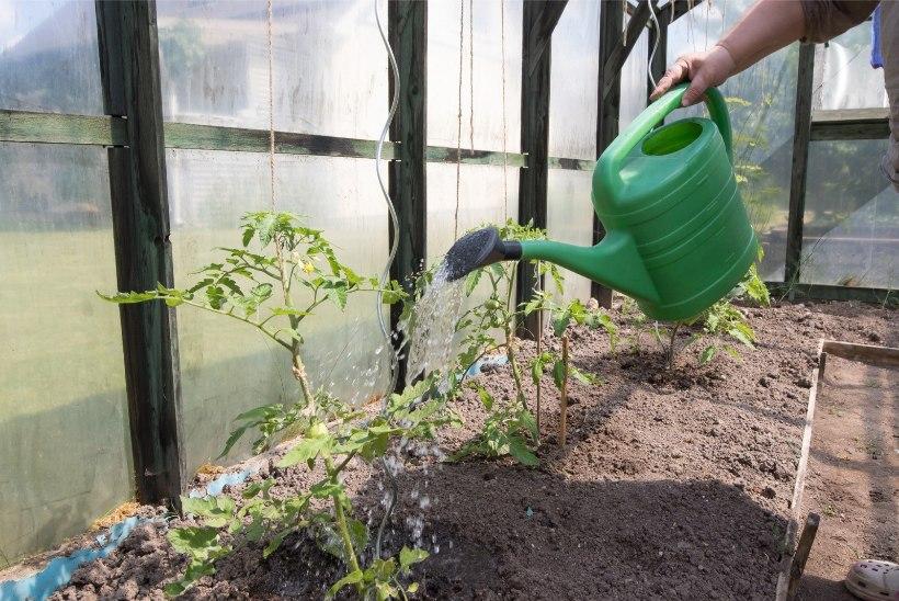 Lugejakiri | Kas kasvuhoones kohvi joomine on tõesti nii suur patt?
