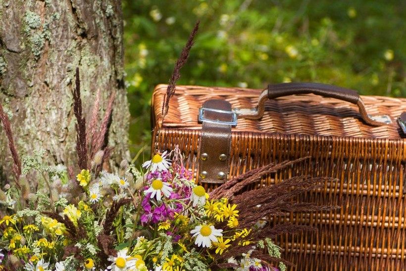 Piknik: selle suve kõige turvalisem pidu
