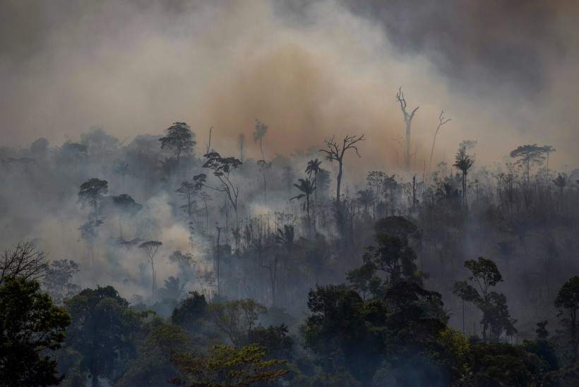 EUROOPA METSADE KURB SAATUS: puud hävivad, süsinik paiskub atmosfääri, suured kaotused on Põhja- ning Baltimaades