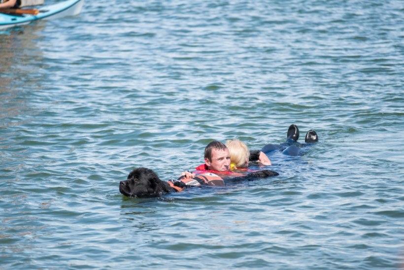 Nii muhe! Päästekoerad Eike ja Arabella igale kiljujale appi ei torma, kuid uppuja päästavad ära