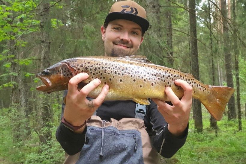Aasta rekordkala konkurss | Kuu kala on 1,5 kilo kaaluv kuldkoger