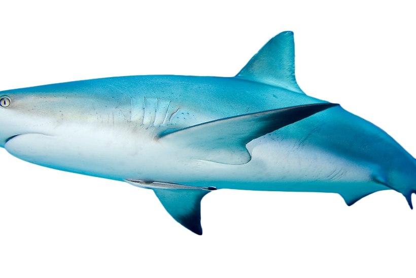 Kas teadsid, kui tihti lööb vaala süda? Aga kui pika tunneli suudab kaevata mutt?