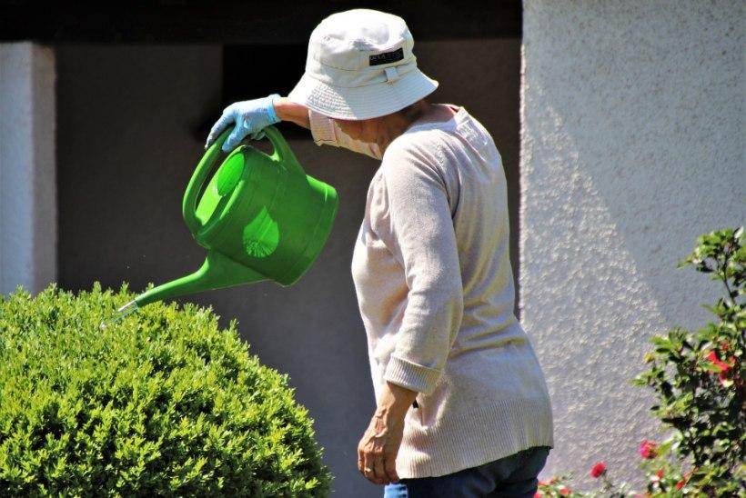 10 soovitust: kui kastad aeda, tee seda põhjalikult!