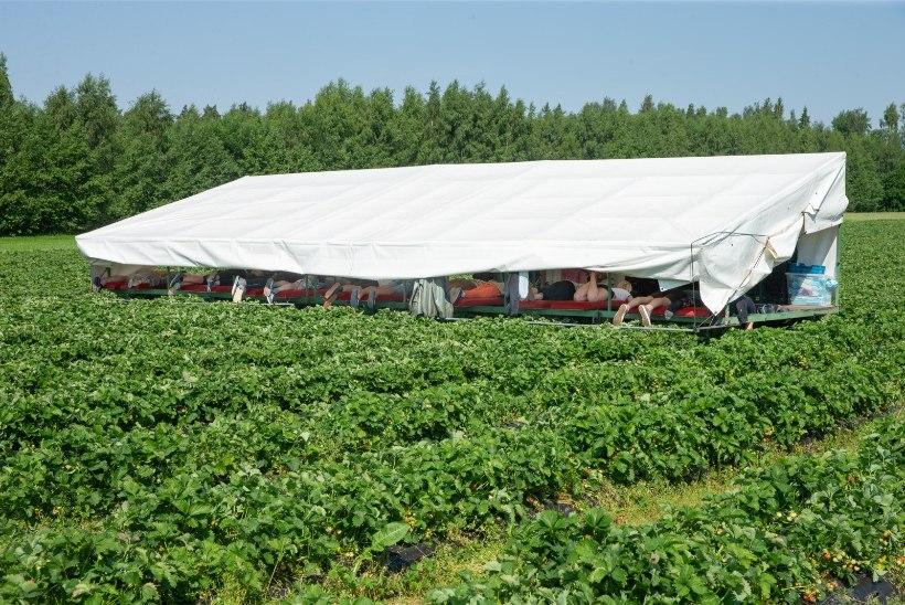 Täna Ukrainast Eestisse saabuvale 170 võõrtöölisele tehakse lennujaamas koroonatest