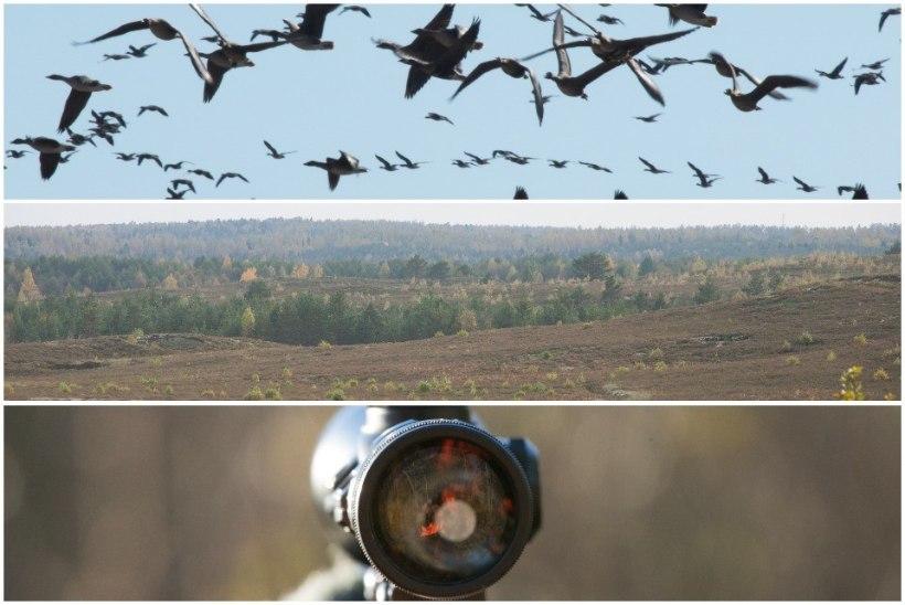 Keskkonnaamet ei võta jahimeeste kisa kuulda: Kõrvemaal jääb linnujaht keelatuks
