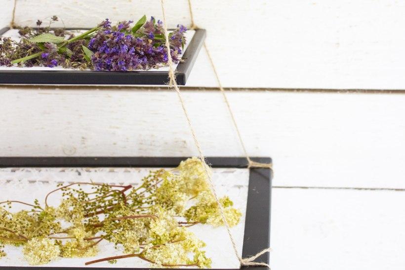 Kodune ürdiparadiis: nutikad riputuslahendused kui vaatemängulised sisustuselemendid