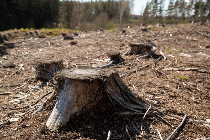 Loodusesõbrad: Raplamaal võeti külaelanikele oluline mets maha! RMK: arutasime kõik enne kohalikega läbi