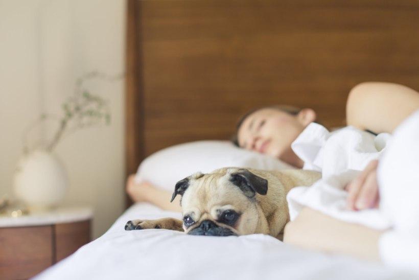 5 nippi, kuidas suveöödel paremini magada