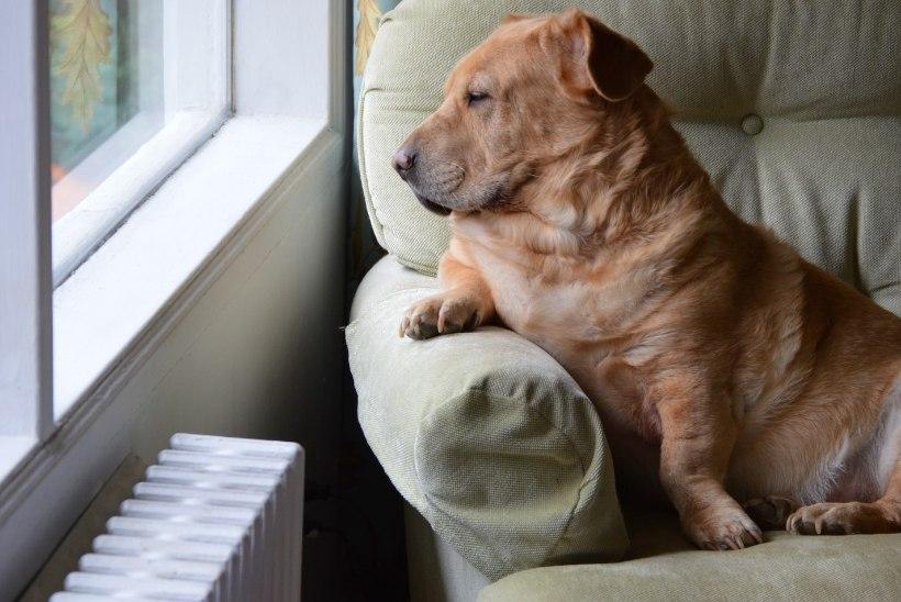 Üürid korterit koos lemmikloomaga? 5 võtmeküsimust, millele tähelepanu pöörata
