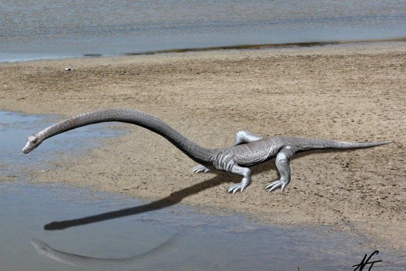 Fossiilide müsteerium lahendatud: ülipika kaelaga roomajad elasid ookeanis, mitte maal