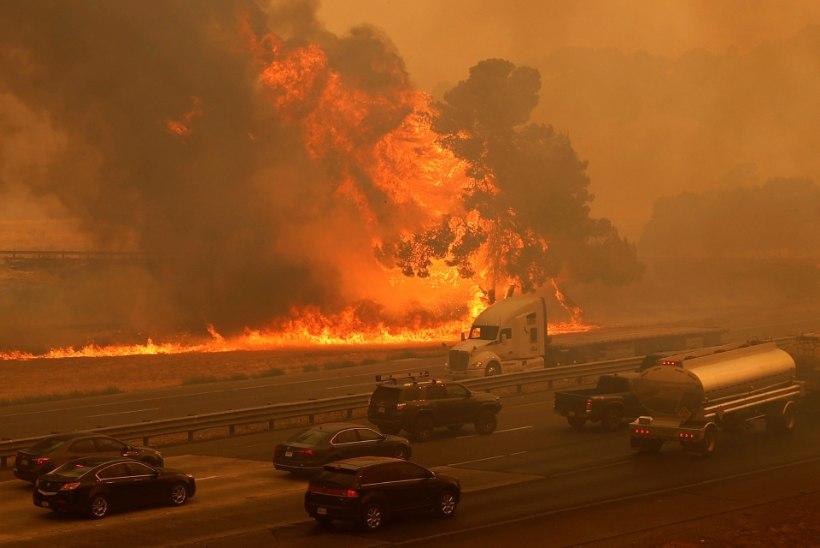 Californias lõõmab üle 400 000 hektari metsa