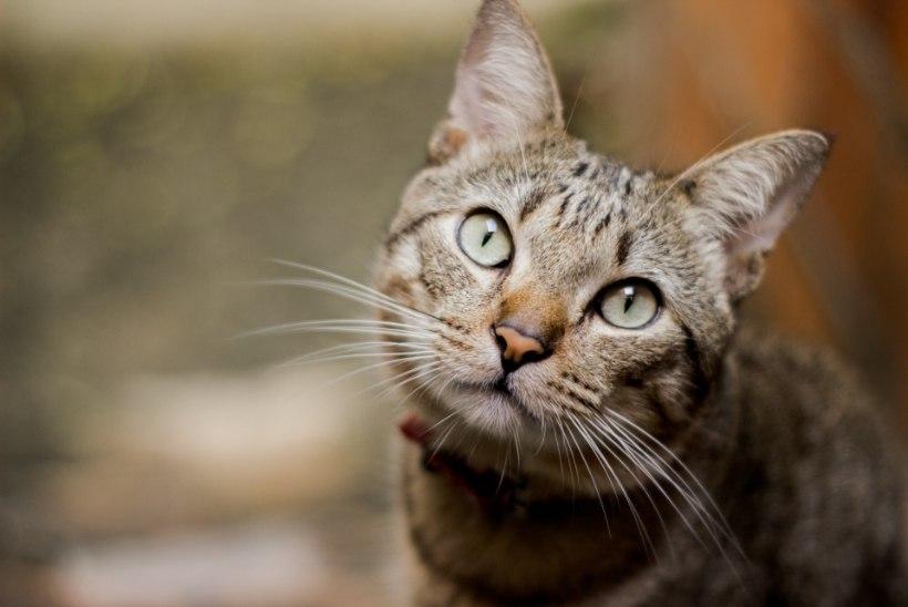 MARUTAUDI VASTU! Kagu-Eestis saab tänasest lemmikloomi tasuta vaktsineerida