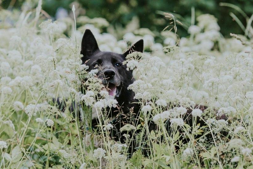 7 soovitust, mida enne lemmiklooma võtmist silmas pidada