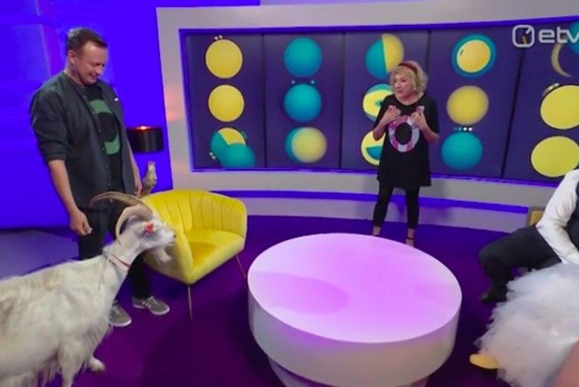 VIDEO |Marko Reikop kinkis Maire Aunastele kitse