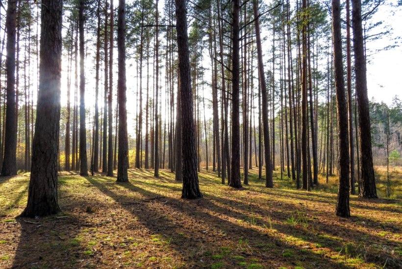 SELLE KUU MÄRKSÕNAD   Jõhvikas, pohl või leesikas, loodusenergia ja pandapäev