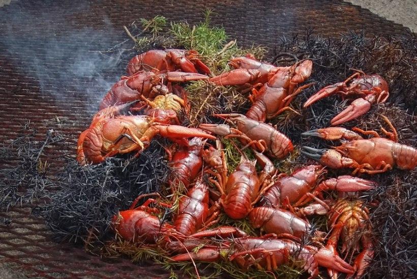 Esmakordselt toimuval Wähja Festivalil saab proovida vähiroogasid ning mekkida puhtaid kodumaiseid maitseid