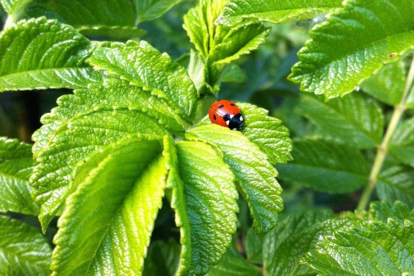 Säilitagem looduslikku mitmekesisust ehk Kuidas luua elurikkust koduaias?