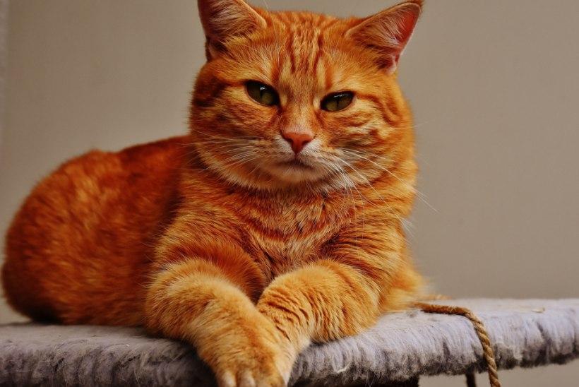 """Aleksei Turovski: """"Ei ole üldse kindel, kes kelle kodustas – kas inimene kassi või kass inimese."""""""