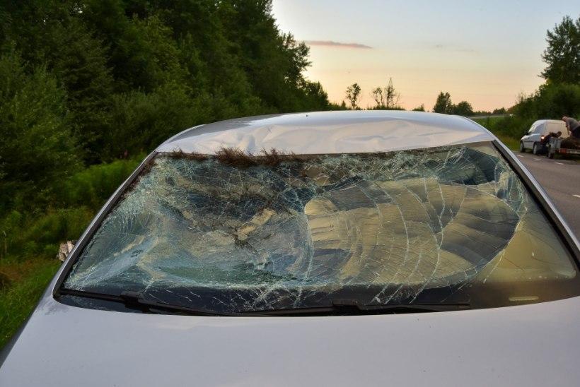 MILLINE MATS! Autolt löögi saanud noor põder hukkus sündmuskohal