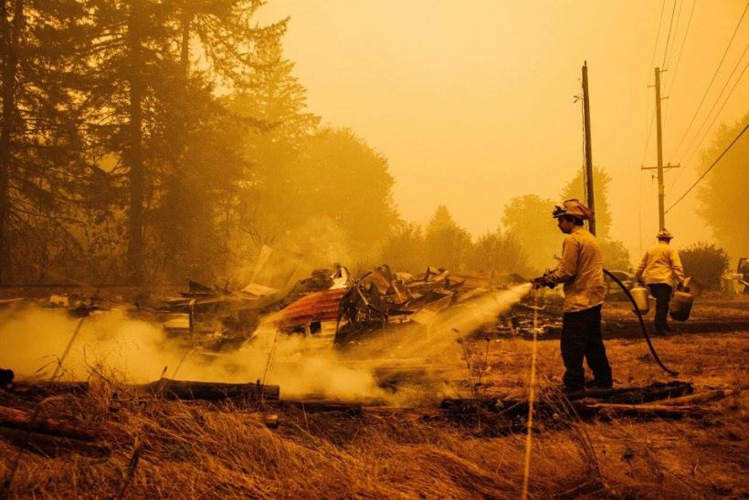 MAASTIKUPÕLENGUD MÖLLAVAD: Oregonis viidi leekide teelt ära kümnendik elanikkonnast