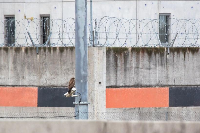 """Vangile ei meeldi trellid: """"Süsteem on üles ehitatud nõukogudeaegsel meetodil – sunnil!"""""""