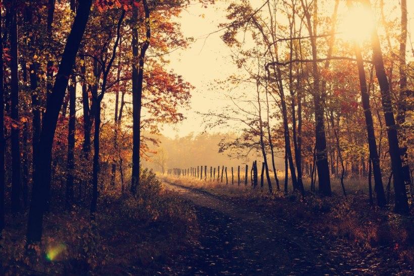 Sügisene pööripäev on seotud maagiaga: õnn ja jõukus tulgu nüüd!