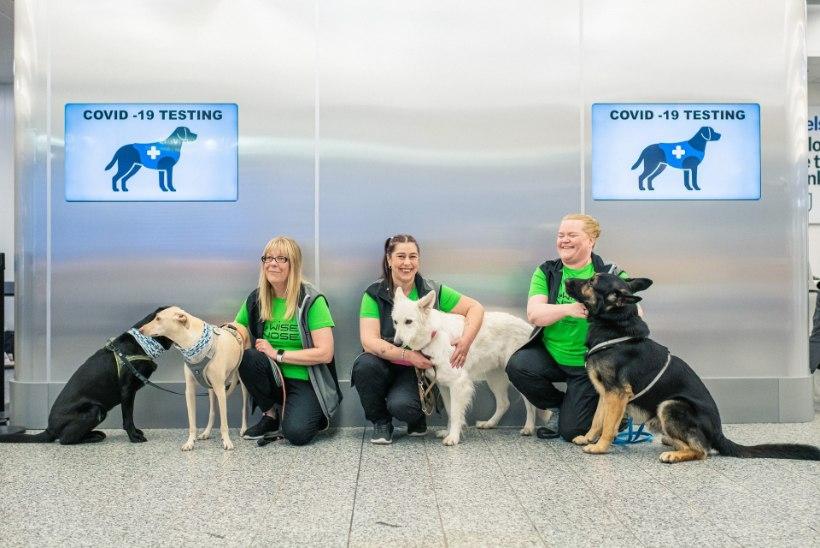 GALERII | NUNNUD NUUSKURID: Soome lennujaamas asuvad tööle koroonakoerad
