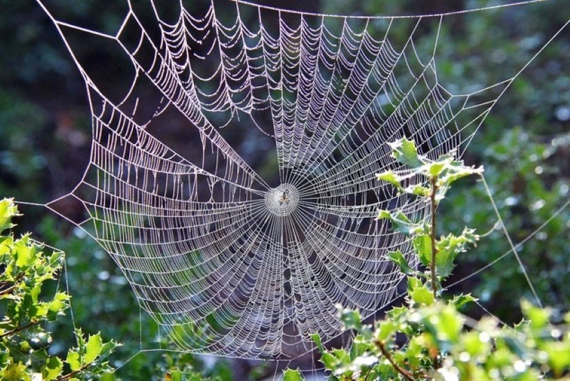 Mõned ämblikud koovad mürgivõrku