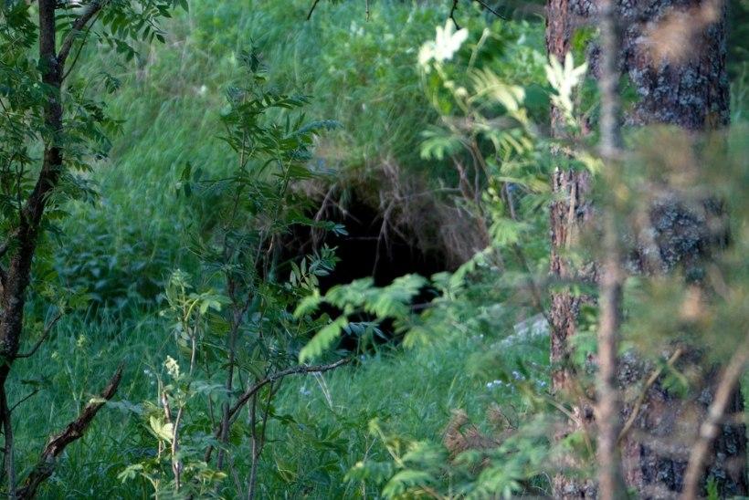 Tõnis Erilaiu lehesaba | Kuidas eestlane Austraalias aastaid koopas elas